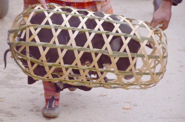 Wietnam, Bac Ha, market - transport zakupionego świniaka