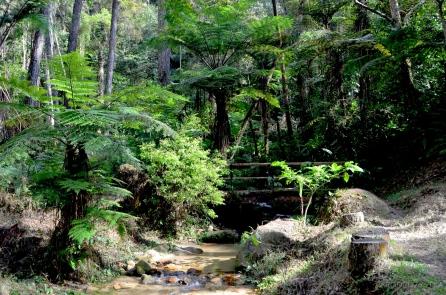 Malezja, Cameron Highlands, wyjście z dżungli