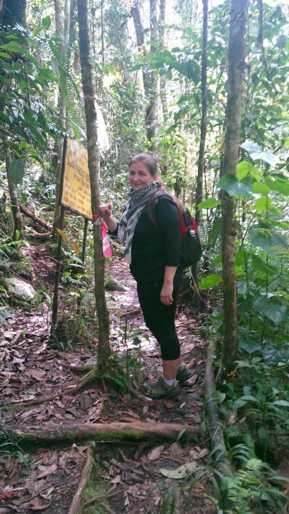 Malezja, Cameron Highlands, na szlaku (nie wiadomo którym)