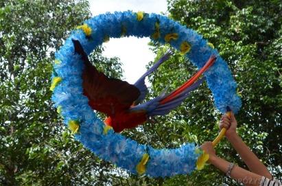 Singapur, Bird Park - Park Ptaków, ara
