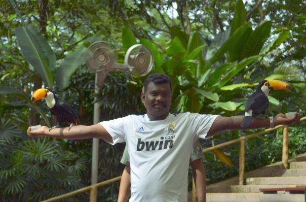 Singapur, Bird Park - Park Ptaków, tukany