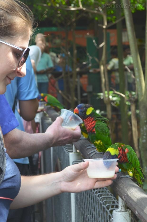 Singapur, Bird Park - Park Ptaków, karmiąc lory