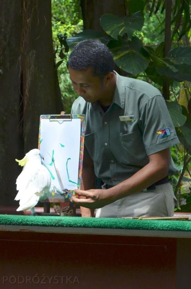 Singapur, Bird Park - Park Ptaków, malująca kakadu