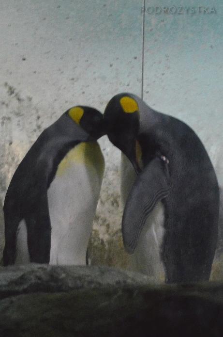 Singapur, Bird Park - Park Ptaków, pingwiny <3