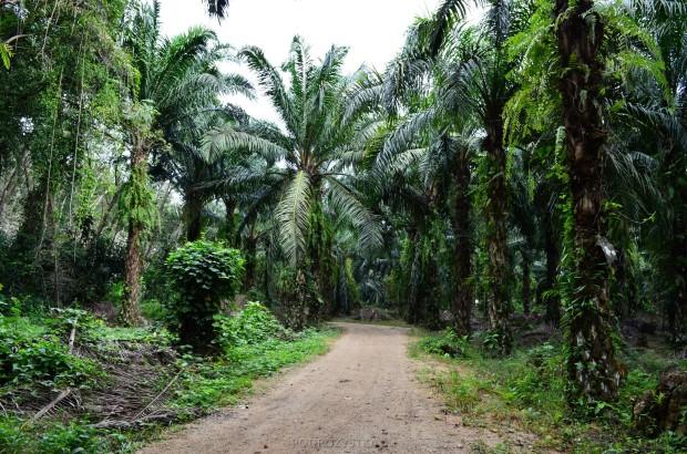 Tajlandia, Krabi, dżungla