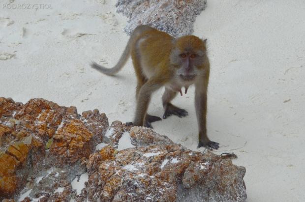 Tajlandia, wyspa Phi Phi, Monkey Beach, jakiś problem?