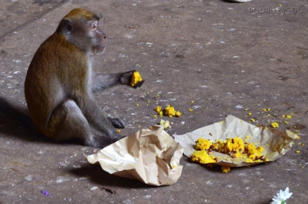 Malezja, okolice Kuala Lumpur, Batu Caves - jaskinie Batu, małpa jedząca na środku świątyni