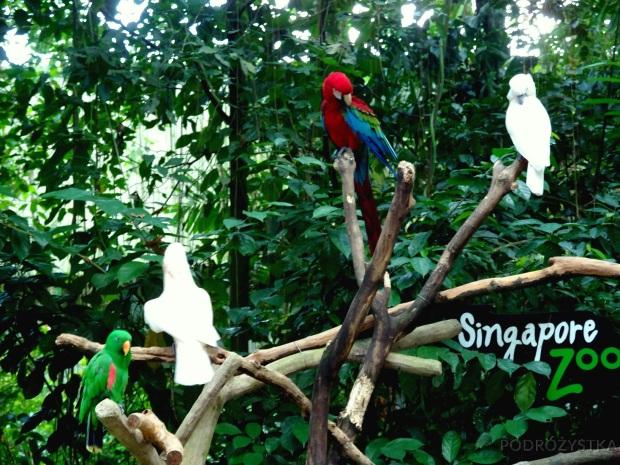 Singapur, Singapore Zoo, papugi