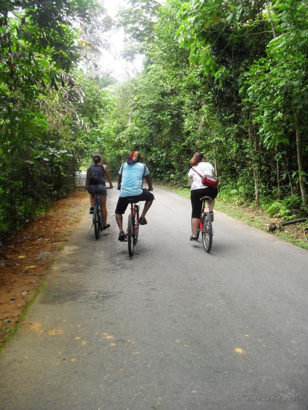 Singapur, wyspa Pulau Ubin, rowery!