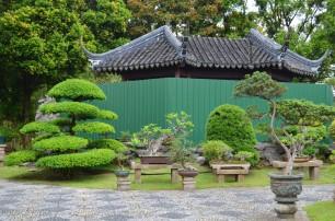Singapur, Chinese and Japanese Garden - Ogród Chiński i Japoński - drzewka bonsai