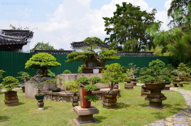 Singapur, Chinese and Japanese Garden - Ogród Chiński i Japoński - więcej drzewek bonsai