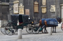 Austria, Wiedeń, przed katedrą Św. Szczepana - koń kryty Gore-Texem nie moknie!