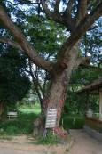 Kambodża, Phnom Penh, Killing Fields, drzewo, o które zabijano dzieci
