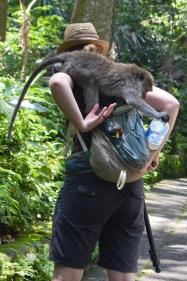 Indonezja, wyspa Bali, Padangtegal Mandala Wisata Wenara Wana Sacred Monkey Forest Sanctuary, małpia złodziejka