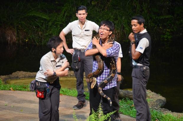 Singapur, Night Safari, przytul zwierza