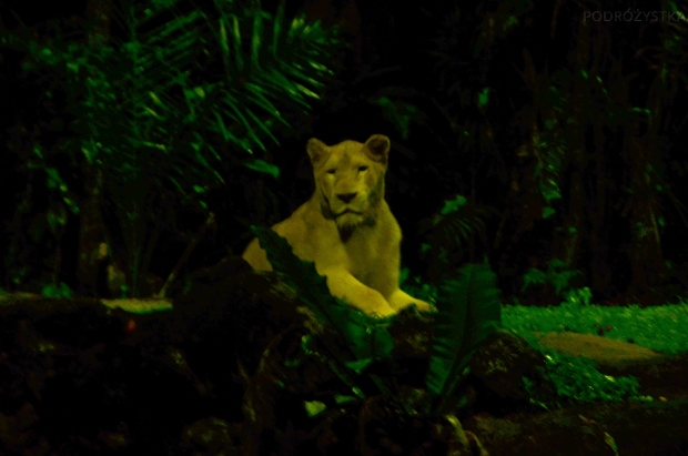 Singapur, Night Safari, lwica