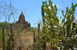 Birma (Mjanma), Bagan, kaktusy!