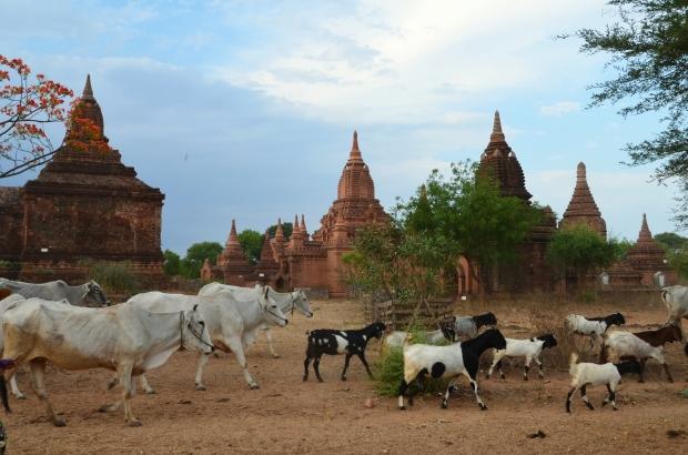 Birma (Mjanma), Bagan, swojsko :)