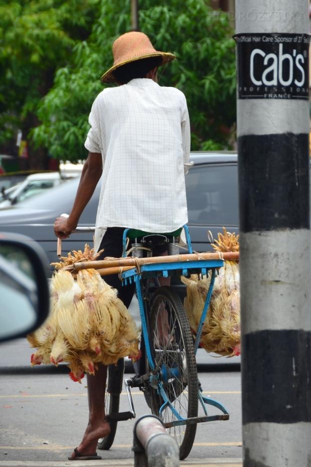 Birma, Yangon, kurczaki na dowóz!