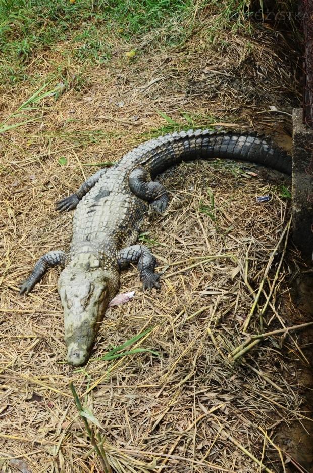 Birma, Yangon, Farma Krokodyli, relaks