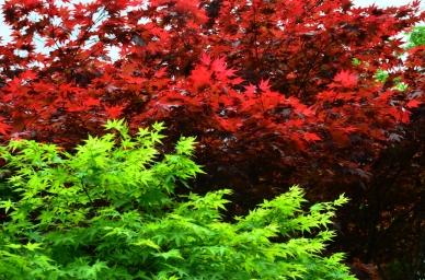 Japonia, Kyoto, kompleks zamkowy Ninjo-jo, ogród zamkowy