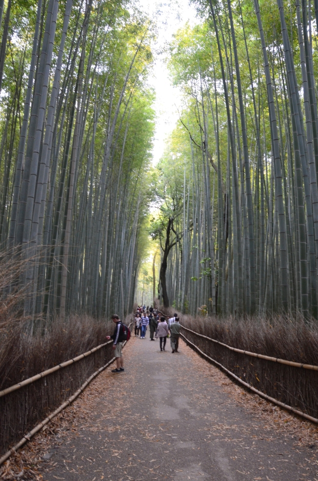 Japonia, Kyoto, Arashiyama, bambusowy gaj