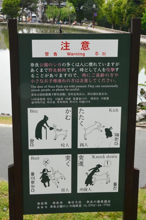 Japonia, Nara, Nara Park - tak atakują jelenie :)