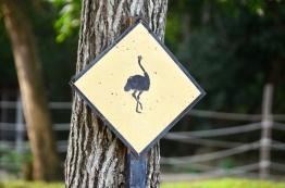 Malezja, Port Dickson, PD Ostrich Show Farm, uwaga strusie!
