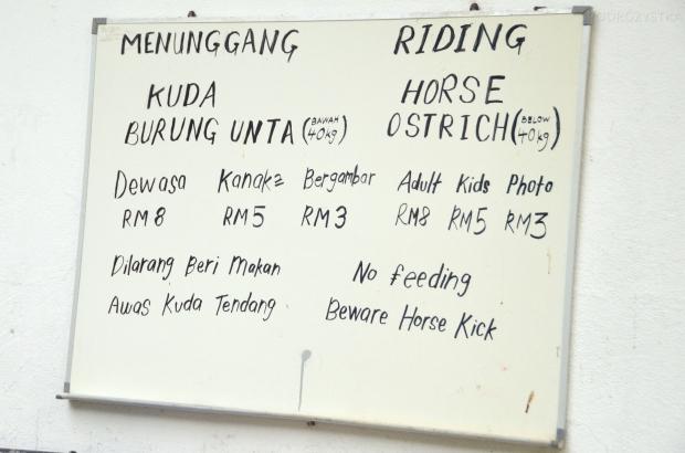 Malezja, Port Dickson, PD Ostrich Show Farm, udźwig strusia - 40kg