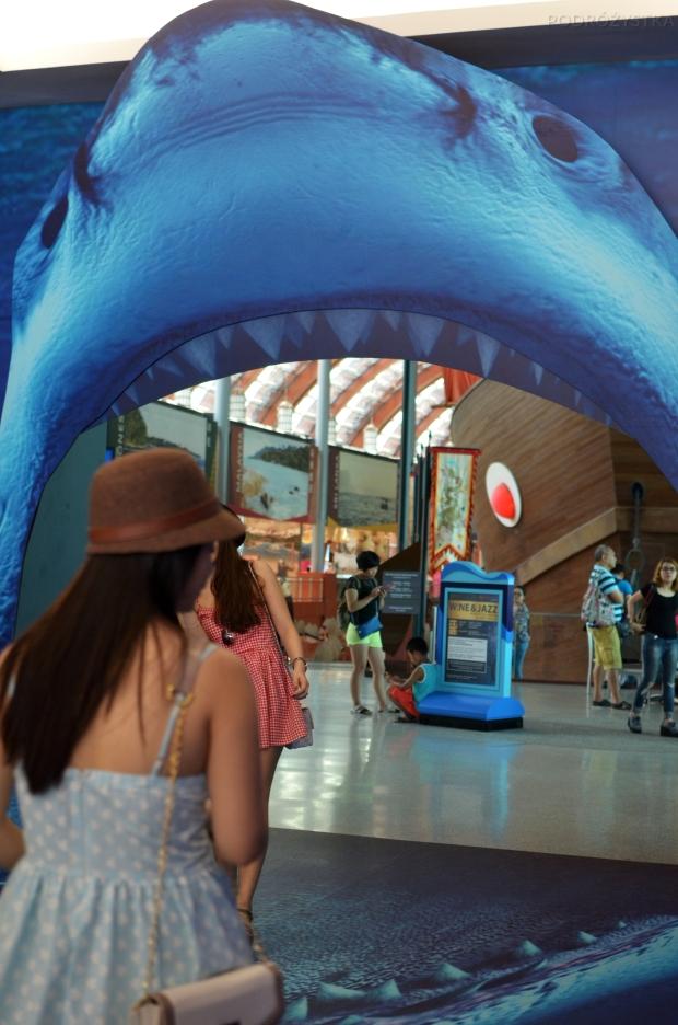 Singapur, SEA Aquarium, wejście