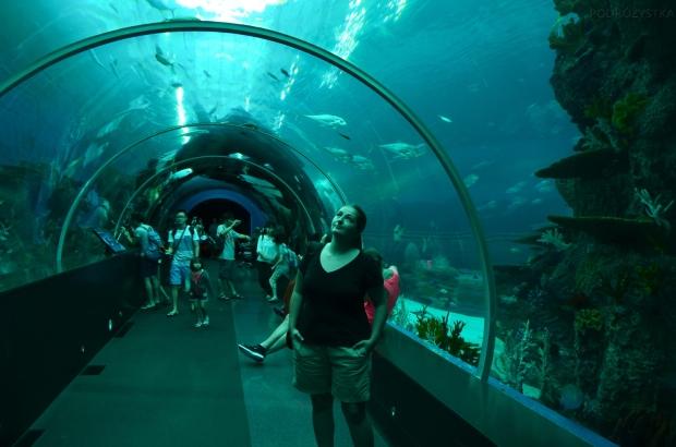 Singapur, SEA Aquarium, jestem na dnie..
