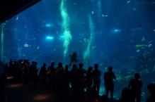 Singapur, SEA Aquarium, lepsze niż największy telewizor