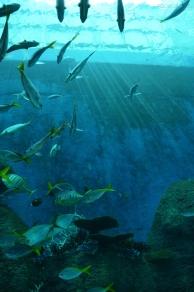 Singapur, SEA Aquarium, w promieniach słońca