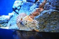 Singapur, SEA Aquarium, mam na Ciebie oko (?)