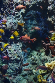 Singapur, SEA Aquarium, kolorowo