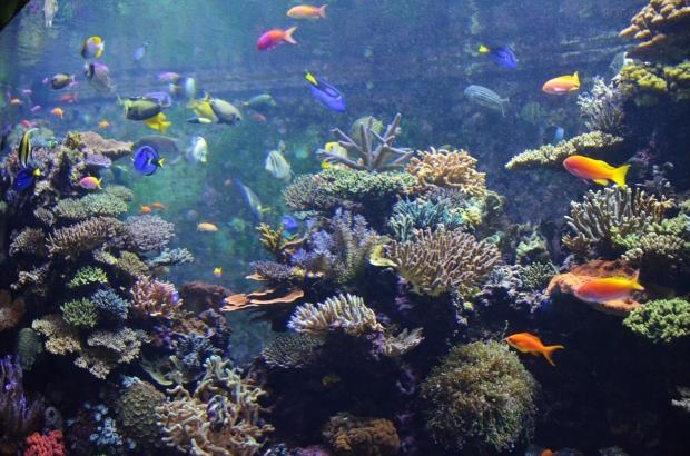 Singapur, SEA Aquarium, kolorowe akwarium