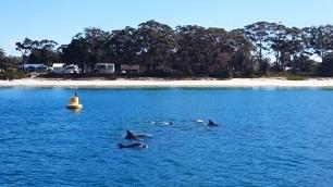 Australia, Jervis Bay (zatoka Jervis), delfiny!!