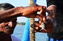 Indie, Kerala, Kochi (Koczin), nasza zdobycz